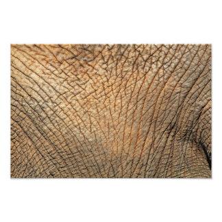 Close-up shot of an Elephant's skin Photograph