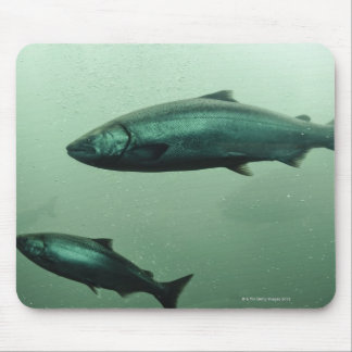 Close up shot of salmon running mouse pad