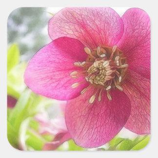 Close Up - Spring Hellebore Sticker