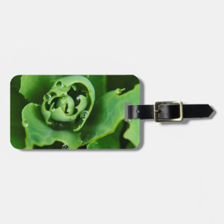Close-up, succulent plant with water droplets bag tag