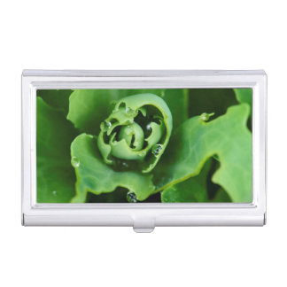 Close-up, succulent plant with water droplets business card case