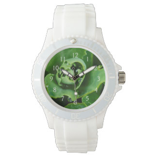 Close-up, succulent plant with water droplets wristwatch