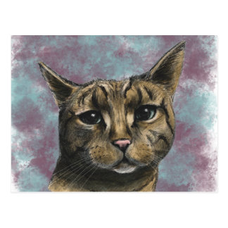 Close Up Tabby Cat Realistic Drawing Postcard