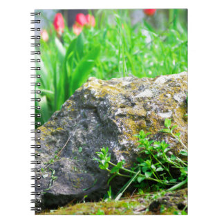 Close-up view of a decorative lawn in a park notebook