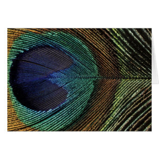 Close up view of eyespot on male peacock feather card