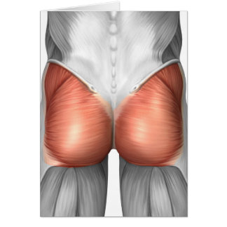 Close-Up View Of Human Gluteal Muscles Card