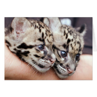 Close-up view of two Clouded Leppard cubs Card
