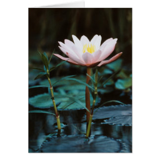 Close-Up view of Water Lily at Inle Lake Card