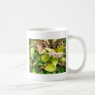 Close-up view on fallen autumn leaves coffee mug