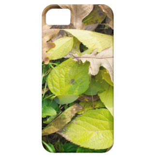 Close-up view on fallen autumn leaves iPhone 5 cases