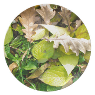 Close-up view on fallen autumn leaves plate