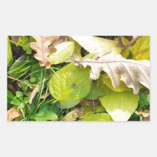 Close-up view on fallen autumn leaves rectangular sticker