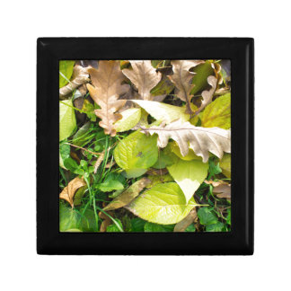 Close-up view on fallen autumn leaves small square gift box