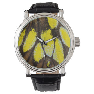 Close-up Wing Pattern of Tropical Butterfly Watch