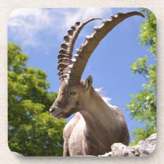 Closeup Alpine ibex Coaster