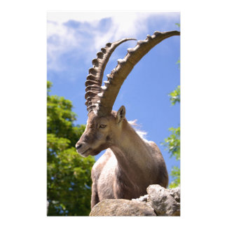 Closeup Alpine ibex Stationery