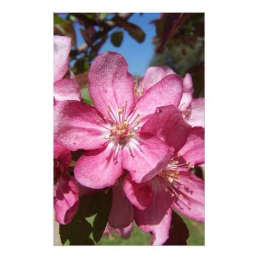 Closeup Crab-Apple Blossoms Personalized Stationery