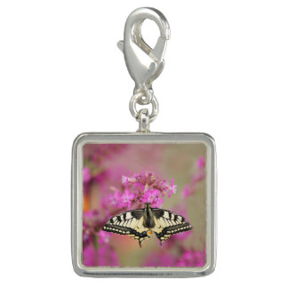 Closeup dovetail butterfly on lilac flower