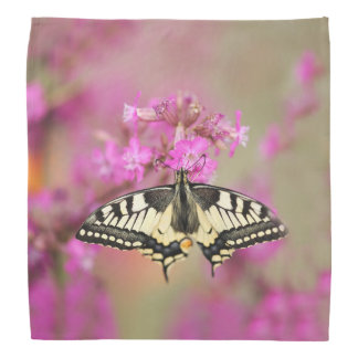 Closeup dovetail butterfly on lilac flower bandana