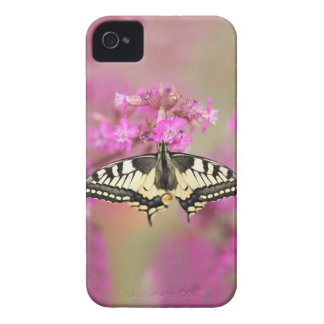 Closeup dovetail butterfly on lilac flower iPhone 4 case
