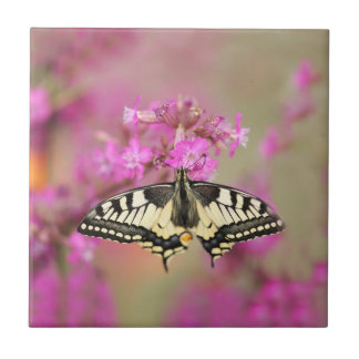 Closeup dovetail butterfly on lilac flower small square tile