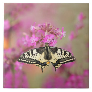 Closeup dovetail butterfly on lilac flower tile