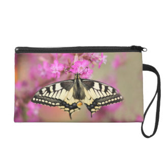 Closeup dovetail butterfly on lilac flower wristlet