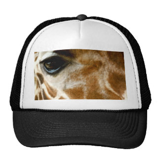 Closeup Giraffe Face Wild Animals Nature Photo Cap