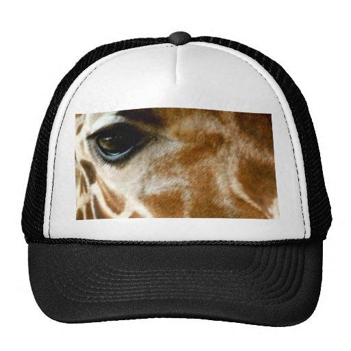Closeup Giraffe Face Wild Animals Nature Photo Hats