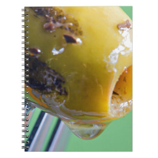 Closeup grilled olive on the fork notebook