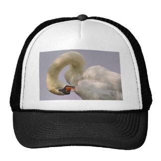 Closeup mute swan cap