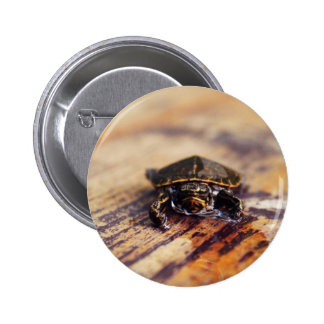 Closeup of a Baby Painted Turtle Pinback Buttons