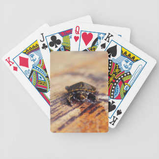 Closeup of a Baby Painted Turtle Deck Of Cards