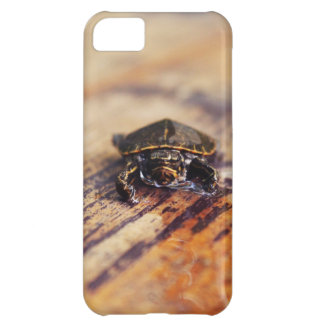 Closeup of a Baby Painted Turtle iPhone 5C Case