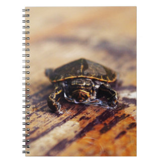 Closeup of a Baby Painted Turtle Spiral Note Books