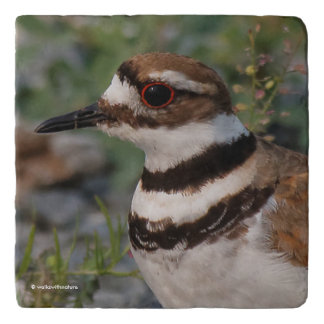 Closeup of a Beautiful Killdeer Trivet