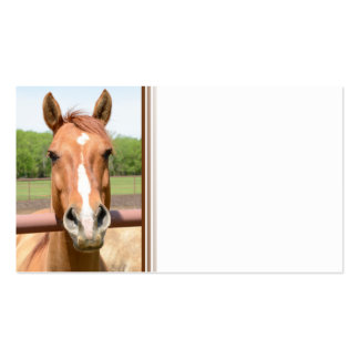 closeup of a brown horse head business card template