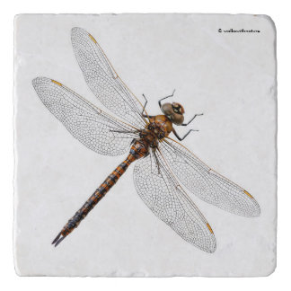 Closeup of a Canada Darner Dragonfly Trivet