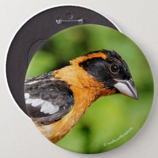 Closeup of a Handsome Black-Headed Grosbeak 6 Cm Round Badge