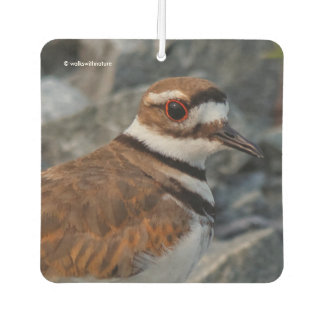 Closeup of a Killdeer Car Air Freshener