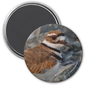 Closeup of a Killdeer Magnet