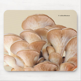 Closeup of An Oyster Mushroom Colony Mouse Pad