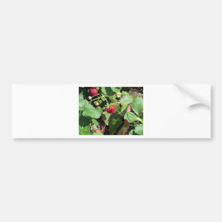 Closeup of fresh organic strawberries bumper sticker