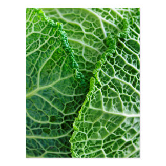 Closeup of green cabbage leaves postcard