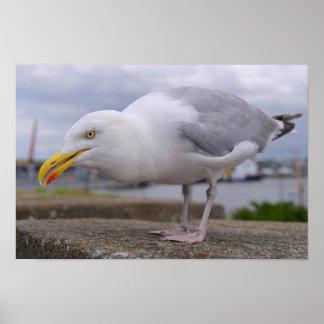 Closeup of Herring gull Poster