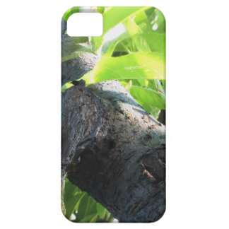 Closeup of peach tree excretion of gummy resin iPhone 5 covers