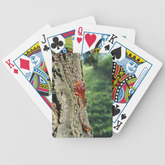 Closeup of pear tree excretion of gummy resin bicycle playing cards