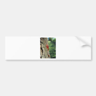 Closeup of pear tree excretion of gummy resin bumper sticker