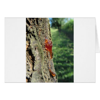 Closeup of pear tree excretion of gummy resin card