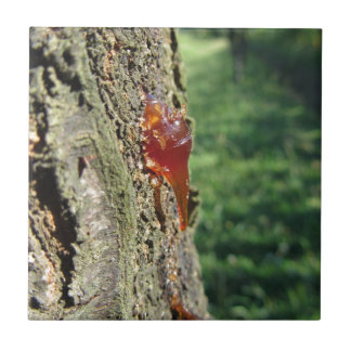 Closeup of pear tree excretion of gummy resin small square tile